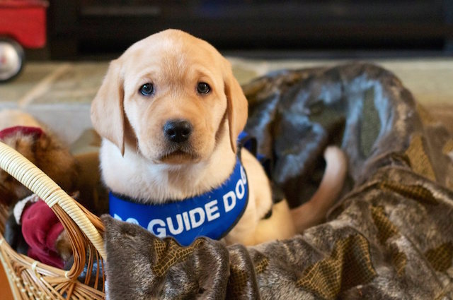 BC and Alberta Guide Dogs