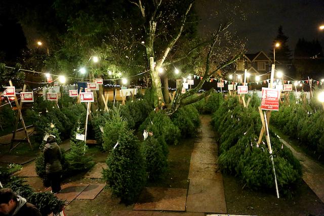 Aunt Leah's Christmas Tree Lots