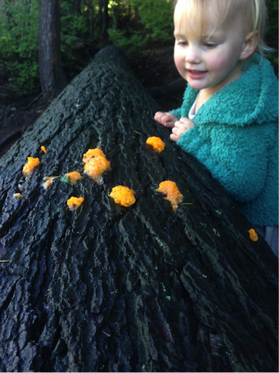 A slime mould fascinates this young Stanley Park visitor.