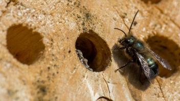 Stanley Park Ecology Society Bee Condo