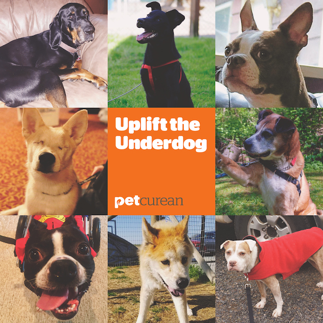 Petcurean Uplift The Underdog