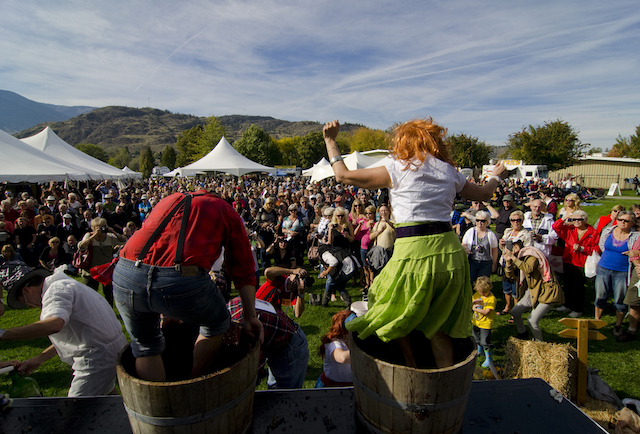 Festival of the Grape Stomp