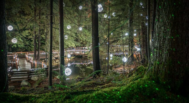 CanyonLights_Forest