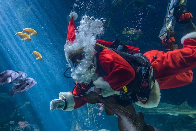 Scuba Claus Vancouver Aquarium