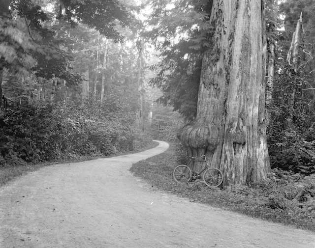 StanleyParkDrive_1898