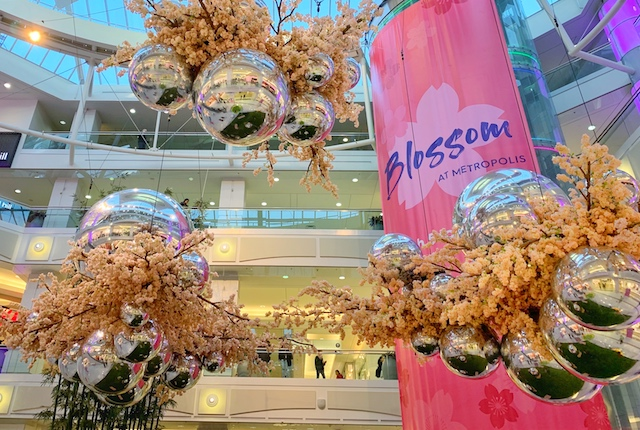 Blossom at Metropolis  - Photo by Alexis Miles