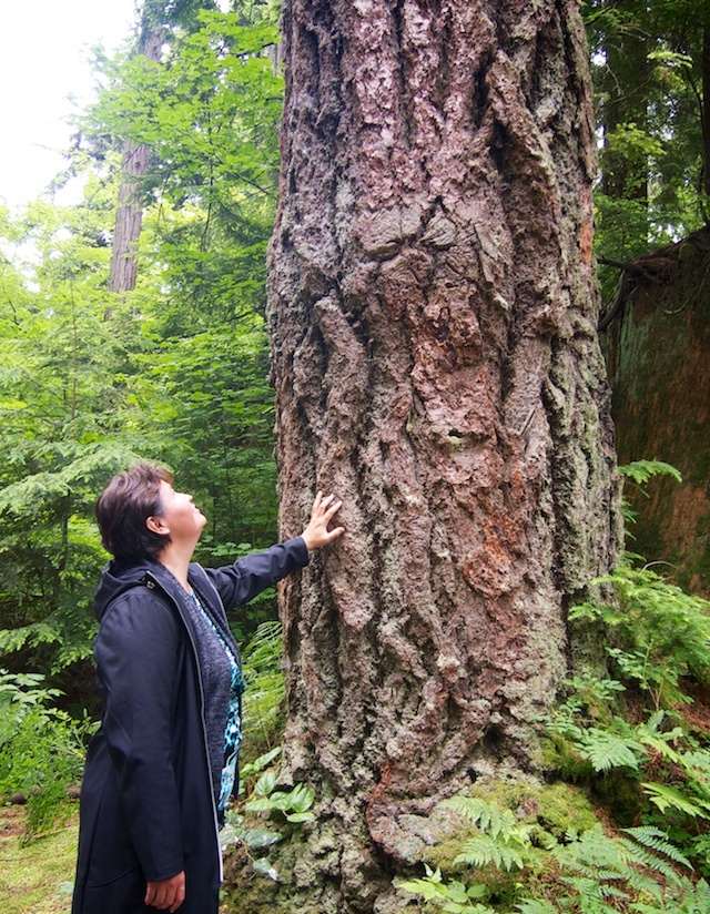 Douglas Fir - Talaysay Tours in Stanley Park