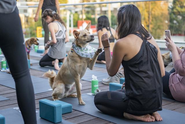 Rover Puppy Patio Yoga