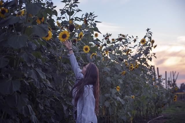 Fraser Valley Sunflower Trail