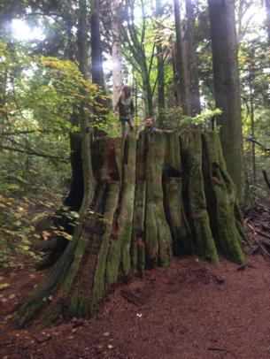 Stanley Park Tree Stump