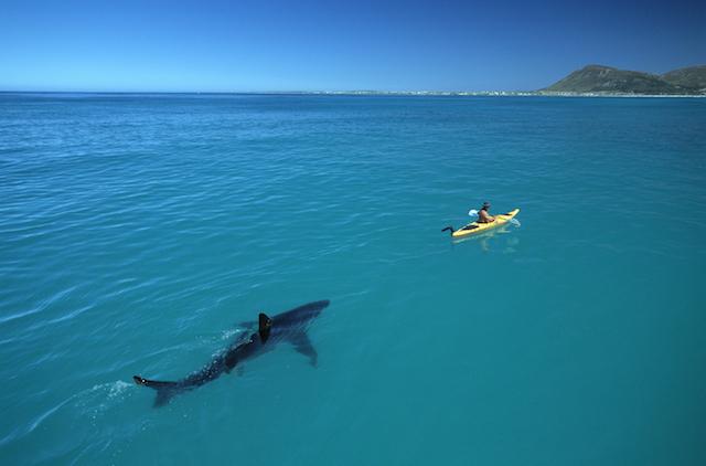 Nat Geo Live Shark and Kayak