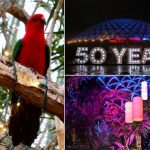 Christmas at Bloedel Conservatory with Festivale Tropicale