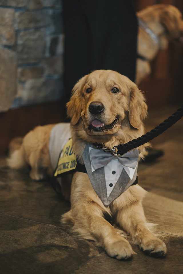 PADS Service Dog - For the Love of Dog Gala