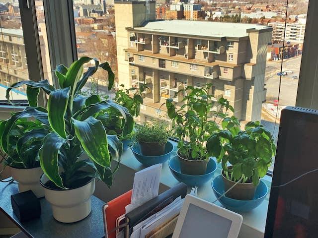 Steffani's home herb garden
