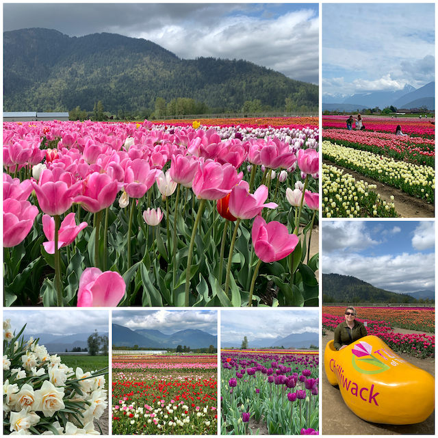 Chilliwack Tulip Festival collage