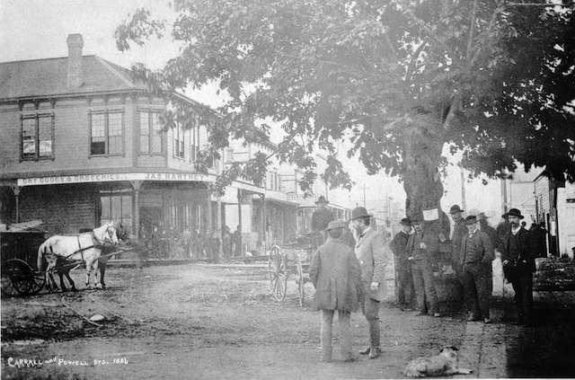 Maple Tree Square 1886 CVA 1477-413