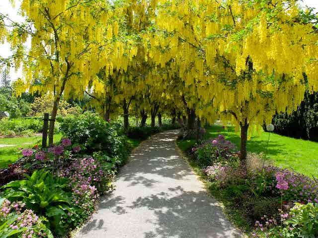 VanDusen Botanical Garden Will be Opening May 1, 2020
