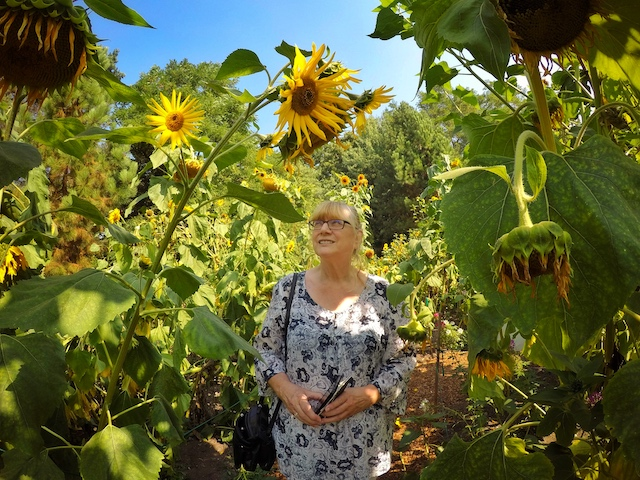 Mom604 with the sunflowers at VanDusen - Colours of the Season at Gardens Around Vancouver