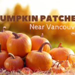 Pumpkin Patches Near Vancouver