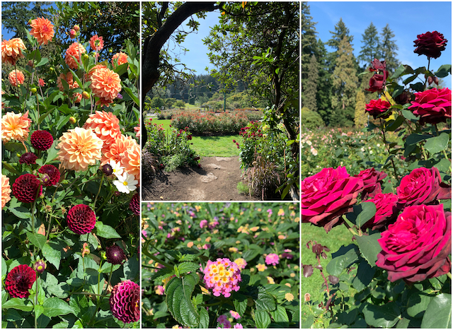 Stanley Park Rose Garden - Colours of the Season at Gardens Around Vancouver