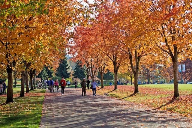 Fall in Coquitlam