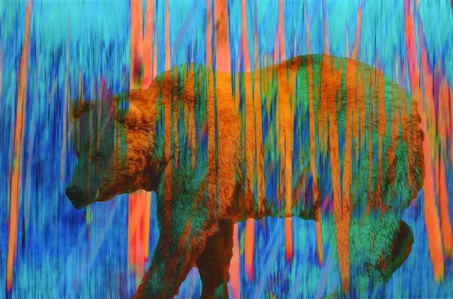 Mark Bowen Vanishing Species - Ocean Blue Bear