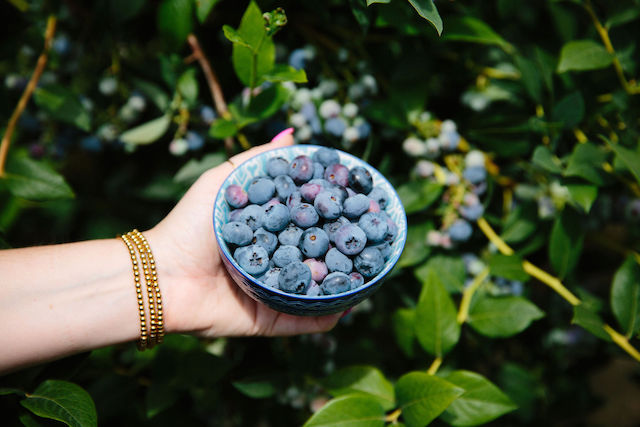 BC Blueberry Council