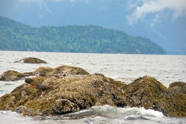 Landsea Tour Howe Sound Miss604 Bollwitt